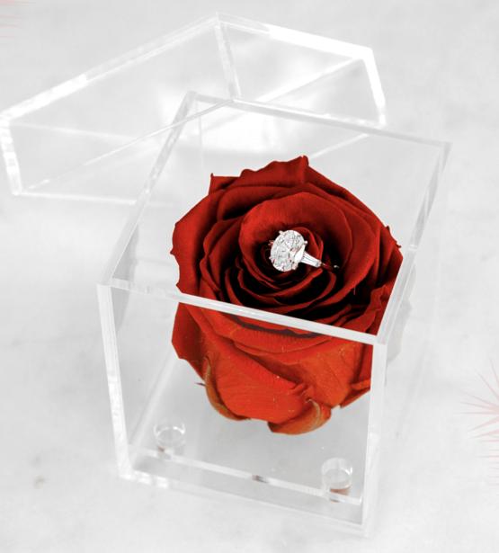 Rose eternelle simple
